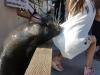 Sea Lion grabs girl dress